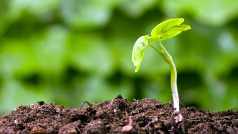 plante-pousse_81